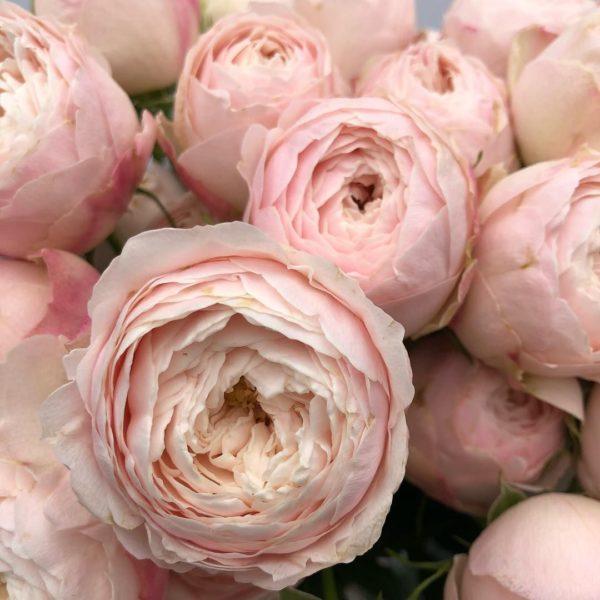 НОВИНКА Mansfield Park (Мэнсфилд Парк), Vip Roses